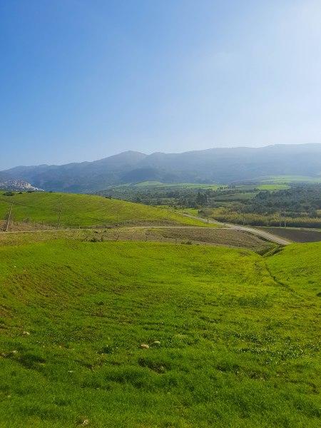 Les terres agricoles verdoyant en face du site archéologique de Volubilis au Maroc