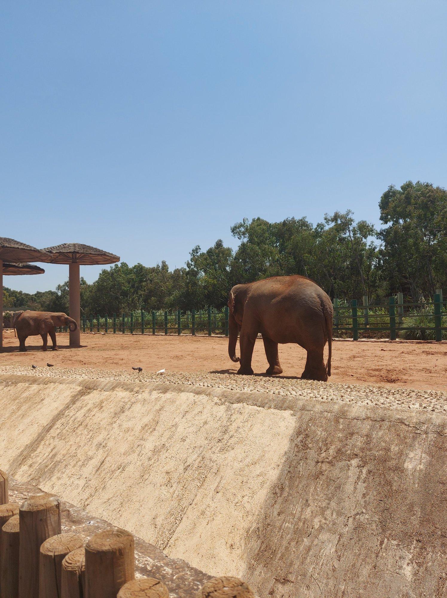 Deux éléphants dans le jardin zoologique de Rabat au Maroc